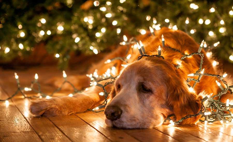 La depresión en navidad